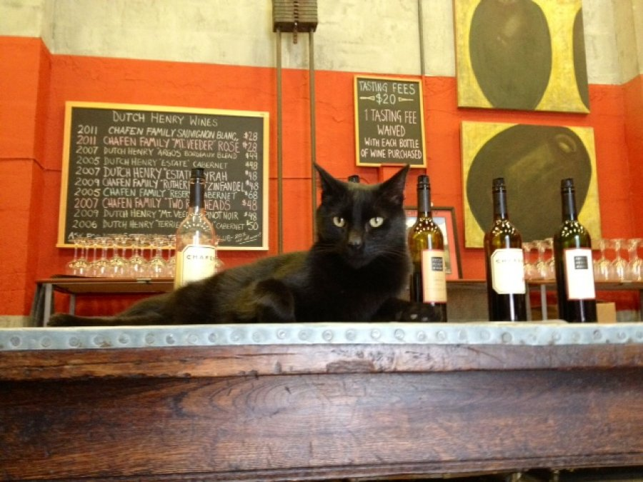 Tasting Room CAT